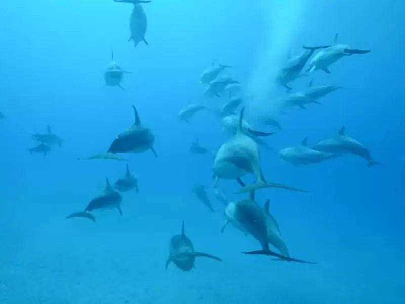 filmy sex delfinów owłosione mamuśki sex fotki