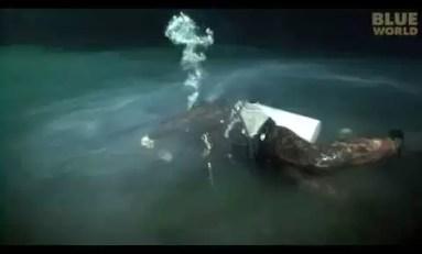 Magia podwodnego świata Cenotów. Muyal-Ha