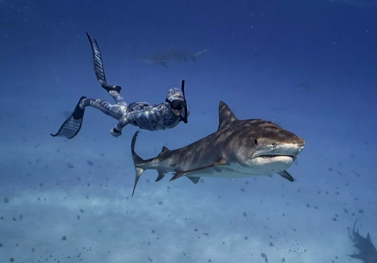 HECS Stealth kombinezon moro Bluewater 3mm. bBiolog morski Riley Elliott nurkujacy z rekinem tygrysim.Fot.:hecsaquatic/Mike Dornellas.