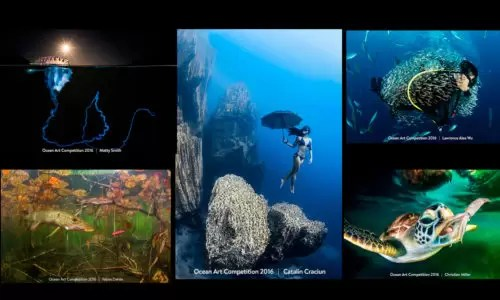 ocean art 6 edycja
