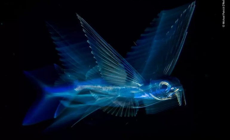 Nocny lot - Michael Patrick O'Neill, USA. Zwycięzca w kategorii: Pod wodą.