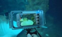 Uniwersalna obudowa podwodna do smartfonów