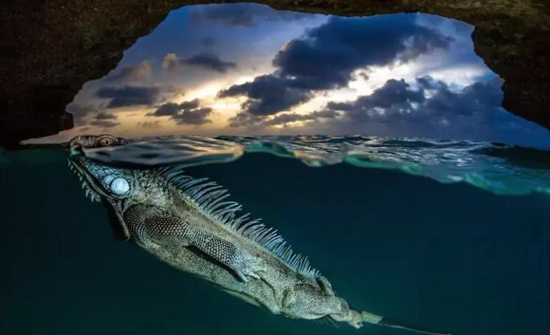 The Green Iguana Kralendijk Bonaire