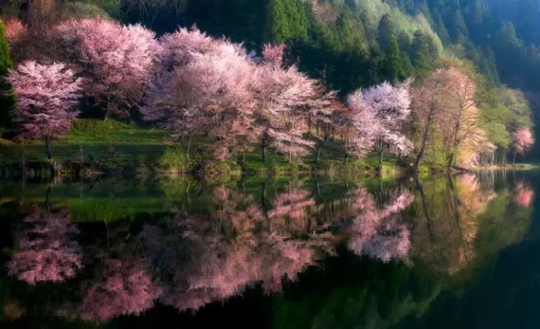 3 miejsce w kat. Natura _w kwiatach fot. Takeshi Mitamura