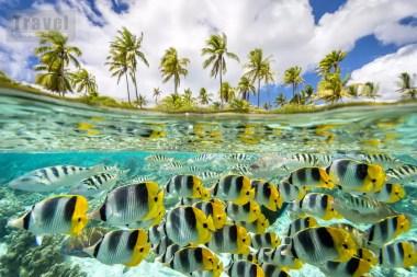 Drugie miejsce - Wyspy - Dana Allen, USA
