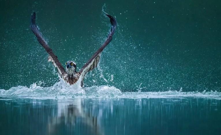 Zdobywca drugiego miejsca Natura, Zycie morskie,przyroda - Wenming Tang, Chiny