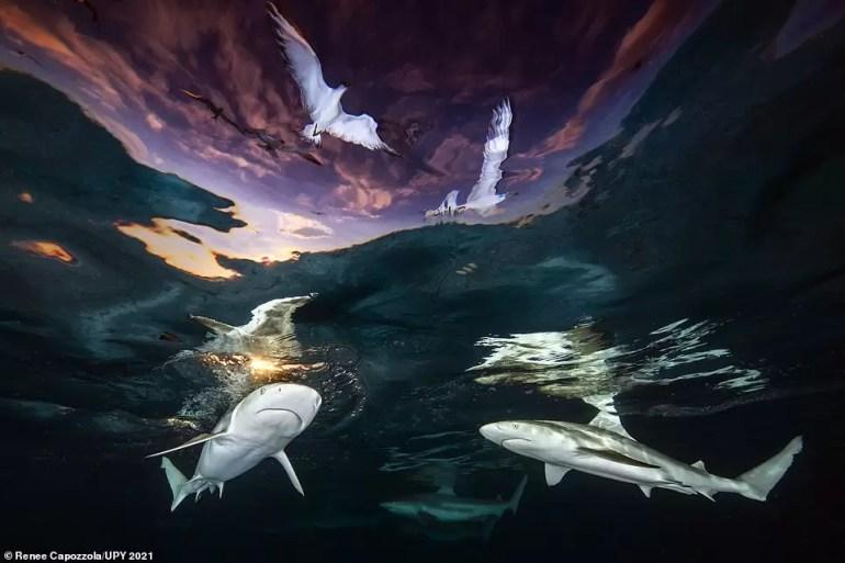 fotograf podwodny roku 2021 7