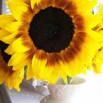 Summer Sunflowers Wordless Wednesday