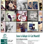 June is National Adopt a Cat Month – Meow Monday