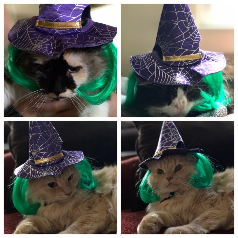 Cats wearing a witches hat
