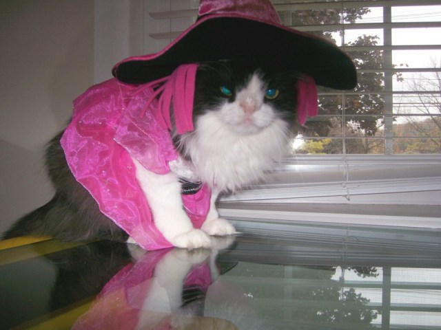 Black and white cat in a pink witch costume