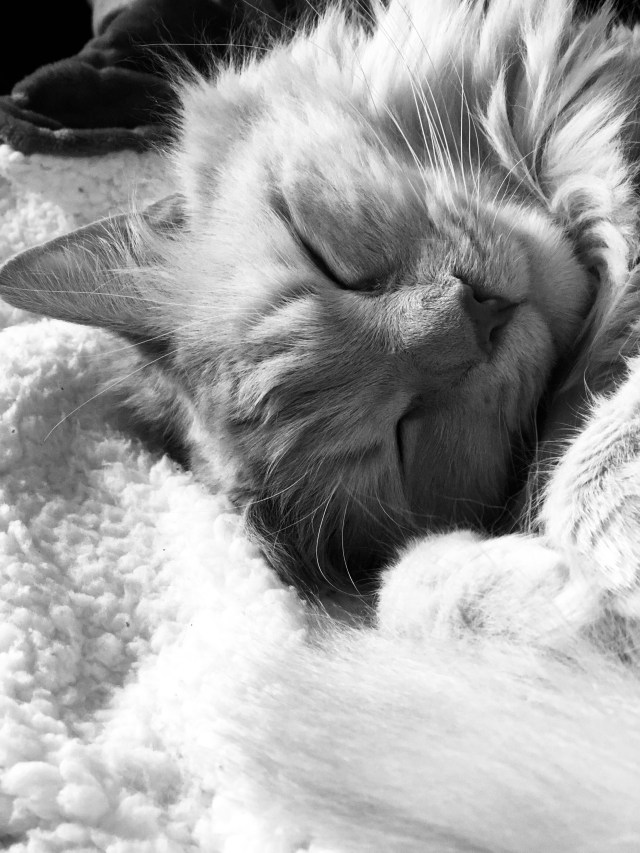 Social Distancing Close up photo of a cat sleeping