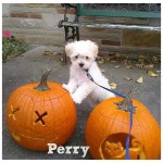 5 Ways to Celebrate National Puppy Day While Social Distancing