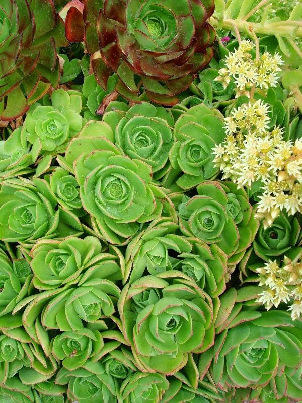 6 drought tolerant plants