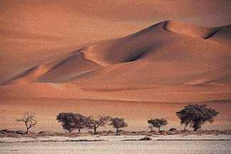 Hot And Dry Desert Biome Rashids Blog An Educational Portal - A hot desert