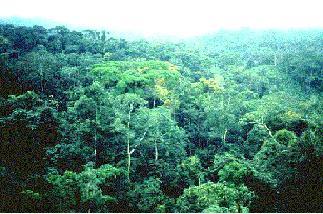 rainforest biome