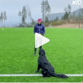 VIDEO: Incredible moment as dog plays Volleyball with human beings
