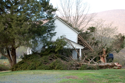 151 in Greenfield Tree on house