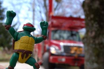 TMN Turtle