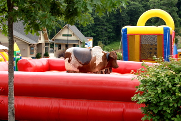 Cow on trampoline