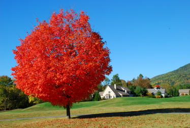 Fall colors in Stoney Creek
