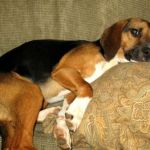 Nellysford : Missing Pet : Glenthorne Loop : Help Me Find My Home