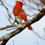 Wintergreen, VA Weather : Tuesday : Rainy : Colder & Windy : Warmup By Next Monday