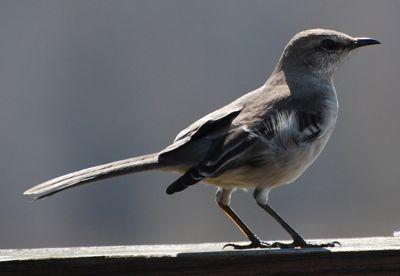 Bird No Wind