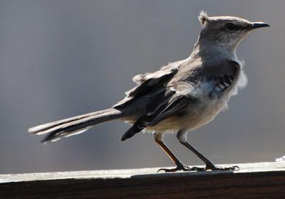 Bird Wind