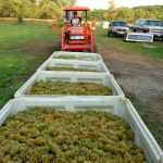 Fall is Arriving : Grape Crushing At Wintergreen Winery