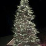 Tree Lighting Ceremony On The Mountain