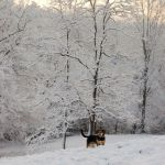Winter Photos : Send Yours In!  : See Photos Here