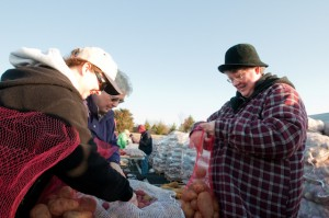 Pastor Debbie Powell helps to bag up the spuds at Saturday's event.