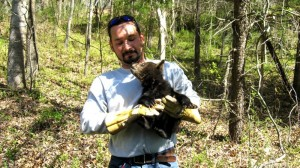 Thanks To Sheriff David Brooks For These Photos : ©2009 NCL Magazine : One of four bear cubs is taken to safety after the mother bear was killed along US 29 Thursday in Nelson County, Virginia. Click on any photo for larger view.
