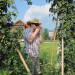 Picking The Hops : 8.4.09