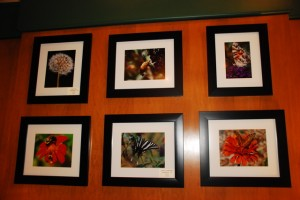 Some of Ann Strober's photography on display through the end of the month @ Stoney Creek Bar & Grill