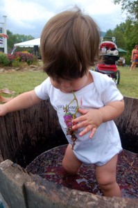 Yes, Junior Publisher, Adam Stafford, tried the grape stomping. Seems he was more intersted in eating the vines and the grapes!