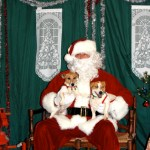 "SPCA ""Paws With Claus"" @ Blue Moon Antique Mall : December 13, 2009 : 1-4 PM"