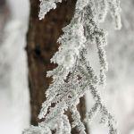 Last Weekend's Snowfall Slowly Retreating : 12.26.09