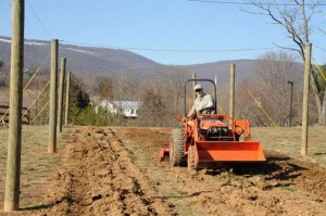 All Photos By Paul Purpura : ©2010 www.nelsoncountylife.com : Stan Driver, owner of Riverside Nursery, works on getting this year's hops in the ground at Blue Mountain Brewery in Afton.