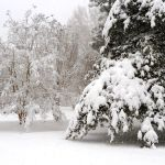 No Big Snow. Still Made For Pretty Christmas