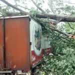 Severe Thunderstorms Cause Moderate Power Line & Tree Damage Across Area