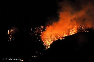©2014 Blue Ridge Life : Photo By Tori Mininger : The flames and red glow could be seen for miles Saturday night as firemen worked to get a large brushfire under control on Peavine Mountain near Shipman in Nelson County, VA - Saturday March 15, 2014