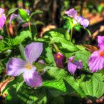 Spring Wildflower Symposium : The Nature Foundation At Wintergreen