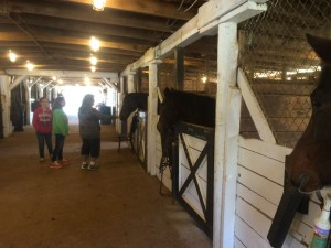 A family checks out some of the horses in the barn during the Rodes Farm Open House - Sunday - November 2, 2014