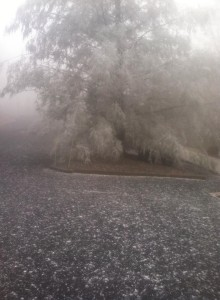 Photo Courtesy of Kim Sillas : Fog frozr to many of the trees at Wintergreen on Tuesday morning making a pretty display.