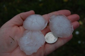 Photo Courtesy of Tiffany Spencer : Tiffany shows us what size hail that fell on Davis Creek Road just north of Lovingston looked like in comparison to a quarter. This was Monday afternoon, May 2, 2016.