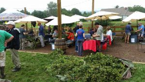 Photos by Martha Hayman : Blue Mountain Brewery was a busty place during the past few days with their annual hop picking and harvest. The fun continues later this month at BMB's Barrel House in Arrington.