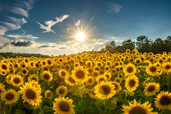 Fall Sunflowers Wallpaper Editor S Picks Archives Blue Ridge Parkway Daily Maps