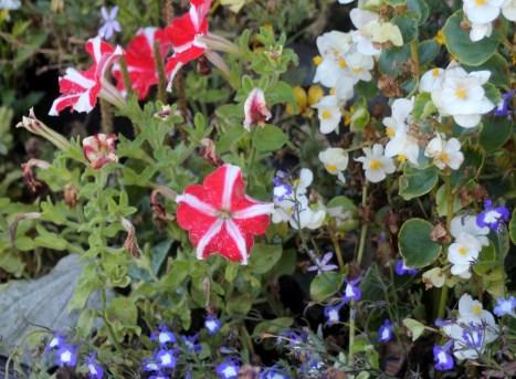 poland flowers